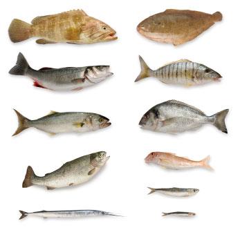Fisch lebensmittel warenkunde for Lebensraum fische
